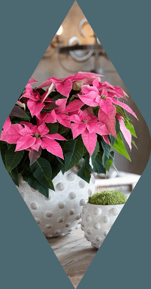 princettia® Hot Pink