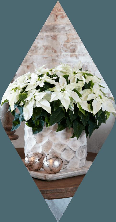 princettia® Pure White